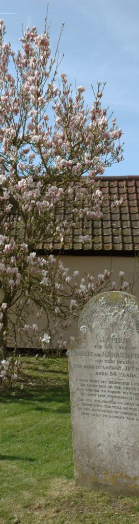 peldon-magnolia